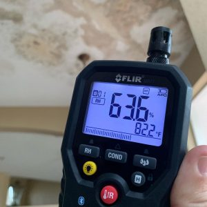 Mold Inspection in Edgewood