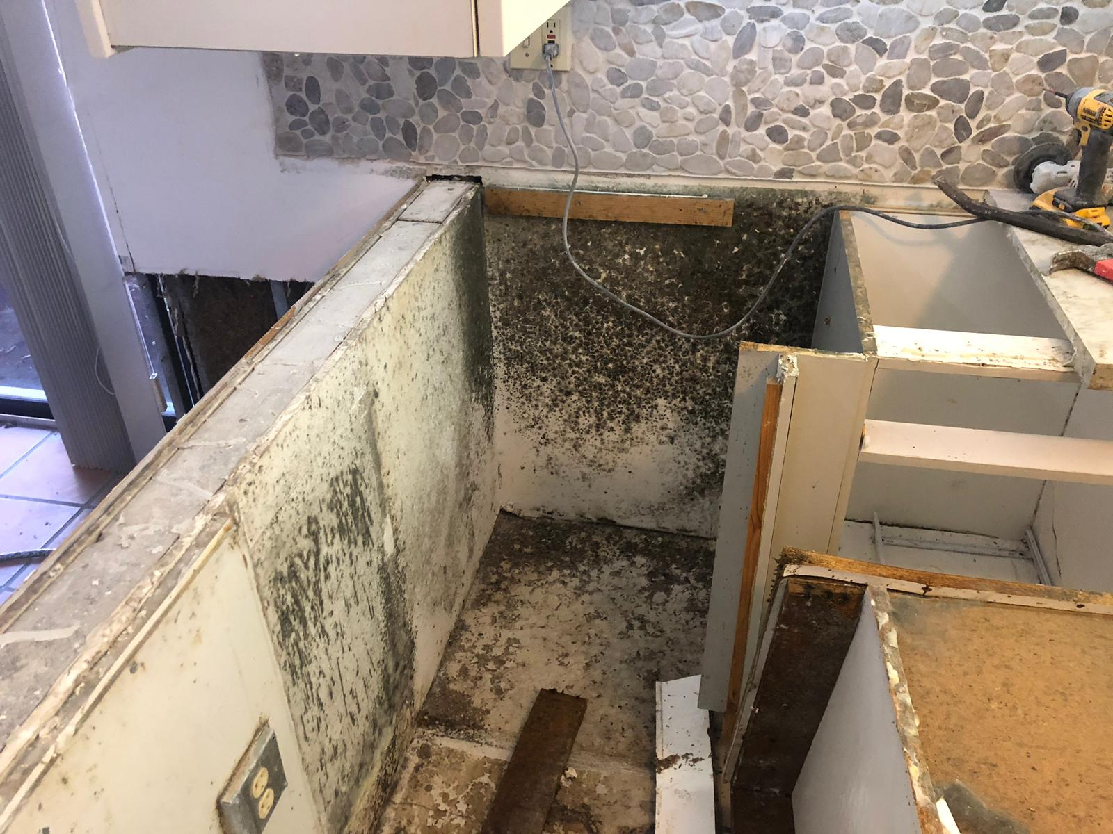 mold remediation in {CITY}